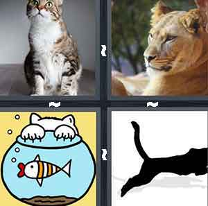 A cat staring up, A Lion staring, A cartoon fish bowl with a cat's claws on it, and A black cat running