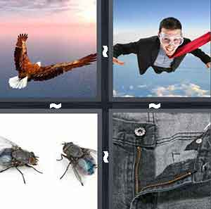 Bald eagle flying, Two flies, Man skydiving, and Zipper, open fly