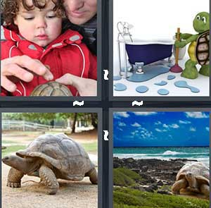 A little boy touching a turtle, A cartoon turtle next to a bath tub, A large turtle, and A sea turtle