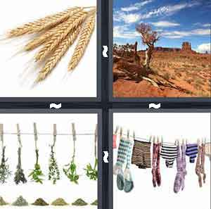 Weeds, dry wheat, Drying vegetables, Desert, and Clothes line