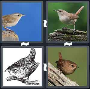 A bird on a rock, A bird on a grey rock, A drawing of a bird in black and white, and A brown bird on a piece of wood