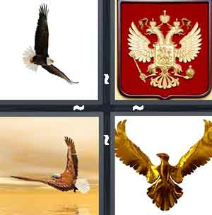 Flying bird, Red crest, Eagle, and Gold winged bird