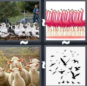 A group of chickens, A group of Flamingos, A group of sheep, and A group of birds