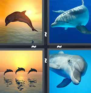 Diving dolphin, Big mammal swimming in the ocean, Three dolphins jumping out of the sea, and Smiling dolphin