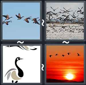 A flock of birds in the sky, Birds flying with ocean in the background, A geese, and Birds flying with sunset in the background