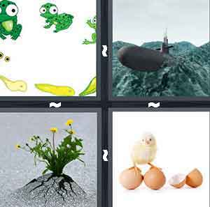 Tadpoles and frogs, Tank in the ocean, Yellow flower in the concrete, and Eggs and a hatched baby bird
