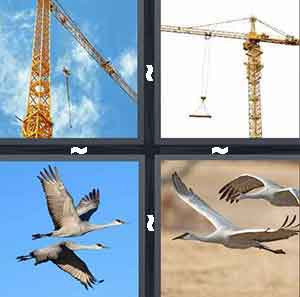 Crane, Construction Crane, Birds flying, and Cranes in the sky