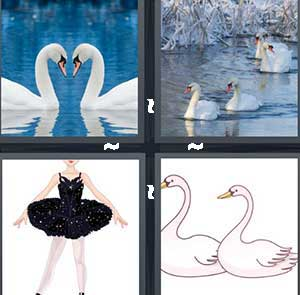 Two white birds, Birds in the lake, A girl in a black dance costume, and Cartoon swans