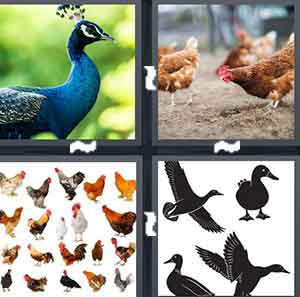A blue bird, A bunch of chickens, Different pictures of chickens, and Different pictures of Ducks
