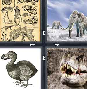 Old animals, Wooly Mammoth / Elephant, Bird, and Dinosaur