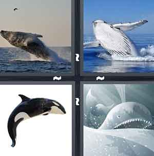 Jumping big whale, Whale leaping out of ocean, Killer/Orca whale (Free Willy), and Cartoon whale